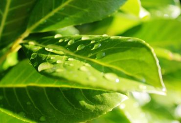 leaf-3631869_1280